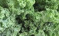 Kale close up of a bunch of at a local farmers market Stock Photo