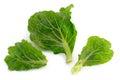 Kale fresh vegetable isolate on white background Stock Photography