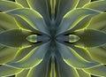 Kaleidoscope 7- agave heart Royalty Free Stock Photos