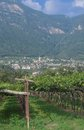 Kaltern south tyrolean wine route italy village of at near bolzano and merano tyrol trentino alto adige italyitaly Royalty Free Stock Photo