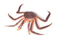 Kamchatka crab on white background Stock Photo