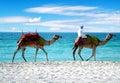 Kamelen op een Strand van Doubai Stock Foto