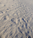 Kangaroo footprints, Wineglass Bay Royalty Free Stock Photography