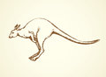 Kangaroo. Vector drawing