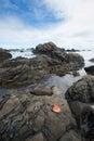Kap jervis shoreline Stockfotografie