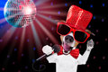 Karaoke singing dog jack russell terrier on black background with microphone a song in a night club disco ball in background Royalty Free Stock Photos