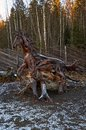 Karelia. The ancestor of Karelian grandfather Frost Talvi Ukko. November 14, 2017 Royalty Free Stock Photo