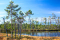 Karelian swamp with lake in evergreen wood Royalty Free Stock Photo