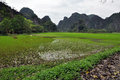 Karst formations and rice fields in ninh binh vietnam Stock Photos