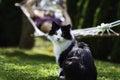 Kat en mens op een hangmat Stock Foto