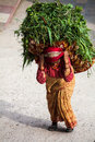 Katmandu nepal april a woman dressed in a sari is heavy basket with grass traditional nepalese way Stock Photography