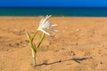 Kato Stalos beach,with water lilly, Chania prefecture, Western Crete, Greece Royalty Free Stock Photo