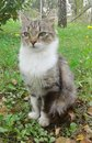 Kattsammanträde i äng Arkivfoton