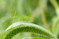 Katydid a stands on grass leaf Stock Photography