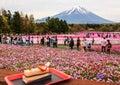 KAWAGUCHIKO, JAPAN-MAY 07,2017: Tourists enjoy dessert in front of the view of beautiful various colored moss phlox shiba sakura
