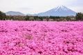 KAWAGUCHIKO, JAPAN-MAY 07,2017: Tourists enjoy the view of beautiful pink moss phlox or shiba-sakura fields in shibazakura festiva