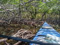 Kayak in mangrove creek a dense the florida keys Stock Photos