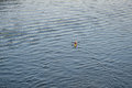 Kayaker on river surface Royalty Free Stock Photo