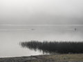 Kayakers on a foggy lake Royalty Free Stock Photo