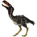 Kelenken bird on white is an extinct genus of giant flightless predatory birds that are called terror birds from the miocene era Royalty Free Stock Photography