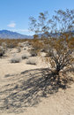 Kelso Dunes Creosote Bush, Mojave National Preserve Royalty Free Stock Photo