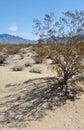 Kelso dunes creosote bush mojave national preserve singing Stock Photography