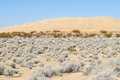Kelso Dunes, Mojave National Preserve Royalty Free Stock Photo
