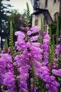 Kemper Center Purple Flowers