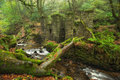 Kennall vale in cornwall the river kenall flowing cascading past an abandoned gunpowder works at nature reserve near ponsanooth Stock Image