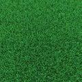 Kentucky Bluegrass Grass on white. 3D illustration Royalty Free Stock Photo