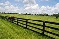 Kentucky Bluegrass Royalty Free Stock Photo