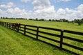 Kentucky Bluegrass Royalty Free Stock Photo