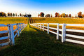 Kentucky Thoroughbred Horse Farm Royalty Free Stock Photo
