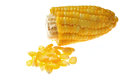 Kernel corn Royalty Free Stock Photo