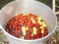 Kettle full of crawfish at a crawfish boil Royalty Free Stock Photo