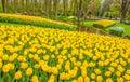 Keukemhof Romantic Blooming Gardens Landscape Holland