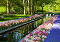 Keukenhof Royalty Free Stock Photo