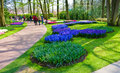 The keukenhof flower garden lisse netherlands april tourists are visiting in spring is a popular which is Royalty Free Stock Images