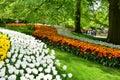 Keukenhof garden, Netherlands. Colorful flowers and blossom in dutch spring garden Keukenhof. Royalty Free Stock Photo