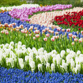 Keukenhof Gardens Royalty Free Stock Images