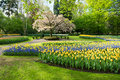 Keukenhof gardens colorful spring flowers in holland garden netherlands Stock Photos