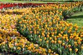 Keukenhof gardens spectacle at the annual display near amsterdam the netherlands Stock Photos