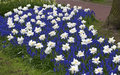 Keukenhof park view of in holland Royalty Free Stock Photography