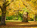 Kew gardens park autumn trees in the royal botanic in london Royalty Free Stock Photos