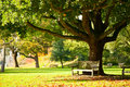 Kew gardens park bench under the tree in the royal botanic in london Stock Photo