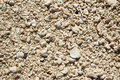 Key West beach shells sand detail in Florida Royalty Free Stock Photo