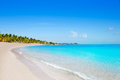 Key west florida Smathers beach palm trees US Royalty Free Stock Photo