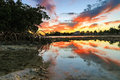 Key West Sunset - Florida Keys - Reflections in Mangroves Royalty Free Stock Photo
