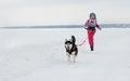 Kharkiv - Jan. 14: Sled Dog Racing. Sportsman girl runs with do