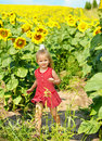 Kid in field of sunflowers Stock Photography